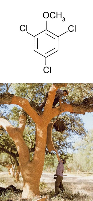 Cork Taint chemical structure and cork tree